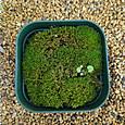 2-1 サンプル鉢